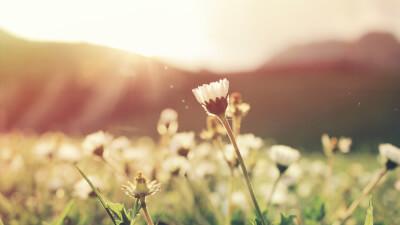 光を浴びる花